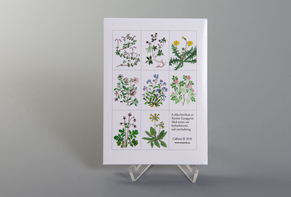 Collection of 8 postcards on medicinal plants by Kerstin Ljungqvist