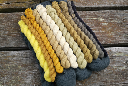 Gold, pullover or cardigan, knitting kit